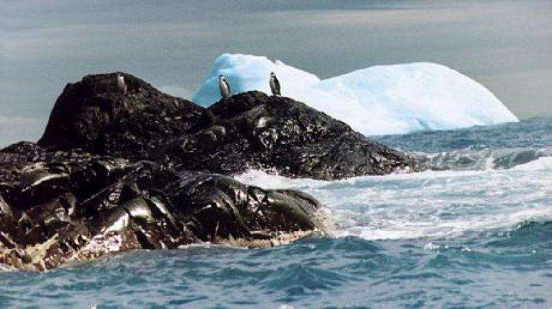 """""""Zügel-Pinguine """"vor Elephant Island"""