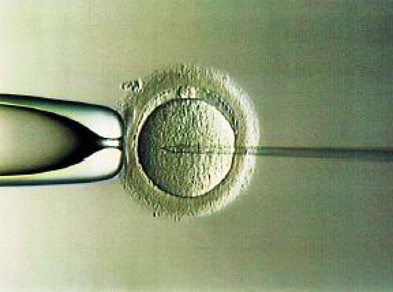 Bei der Präimplantationsdiagnostik (PID) werden außerhalb des Mutterleibes befruchtete Eizellen (hier: Intra-Cytoplasmatische Spermien- Injektion) genetisch untersucht. PID durfte in Großbritannien bisher nur zum Ausschluss schwerer genetischer Krankheiten angewandt werden. Foto: dpa