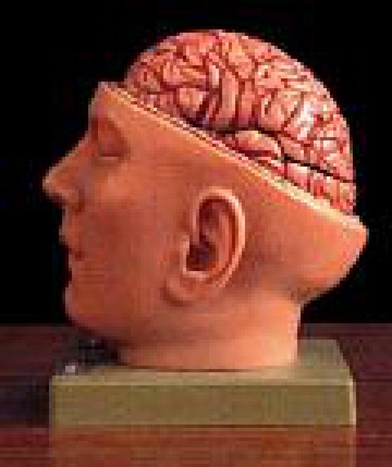 """Operation Gehirn, Themenabend bei """"arte"""" am 19. März ab 20.45 Uhr Foto: arte"""