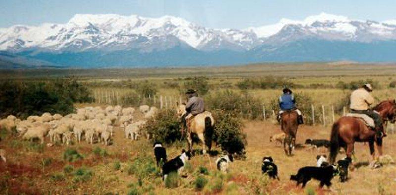 Auf dem Weg nach Calafate: Gauchos mit ihrer Schafherde Fotos: Ingeborg Derkorn