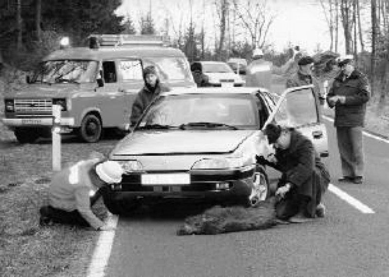 Auch bei Unfällen mit Tieren sollte die Unfallstelle gesichert und die Polizei verständigt werden. Foto: Daewoo/WW