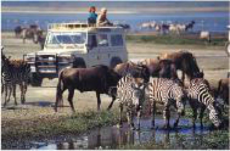 Etosha-Pfanne: Abends kommen die Tiere ans Wasserloch. Fotos: Gerlinde Clade