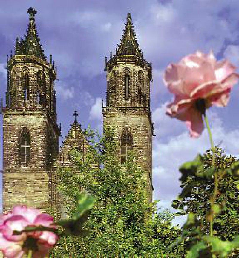 Magdeburger Dom mit Rosen. Foto: Werner Klapper