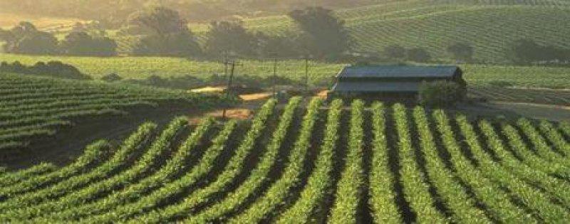 Mit importierten Weinreben aus Europa begann 1830 die Geschichte des kommerziellen Weinanbaus in Kalifornien. Foto: California tourism