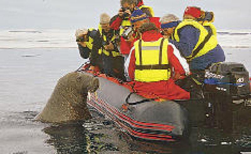Das Schlauchboot wird zum Spielball der Walrösser.