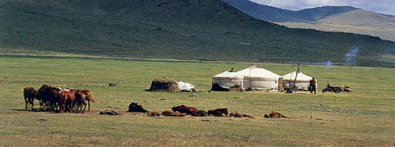 Wie Pilze wachsen die Jurten aus der Steppe. Mehr als die Hälfte der Mongolen leben in der traditionellen Behausung aus Holz und Filz.
