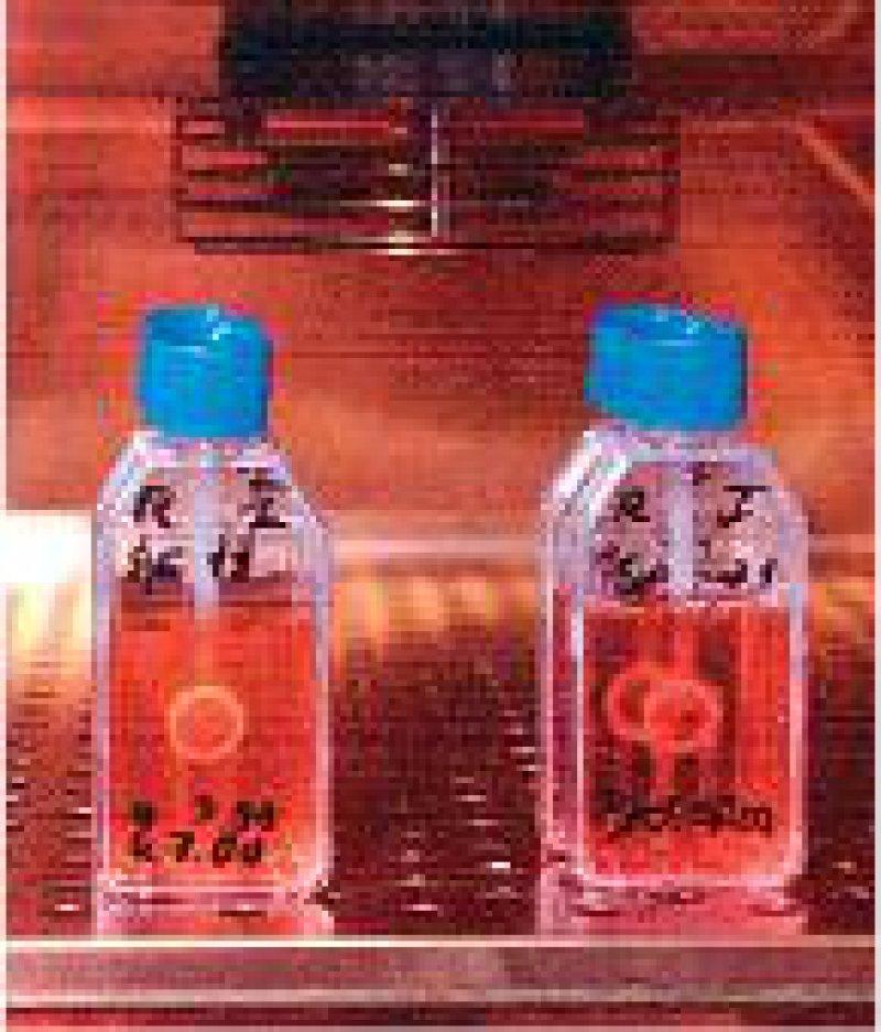 Hornhauttransplantate fallen jetzt unter das Arzneimittelgesetz. Foto: ddp