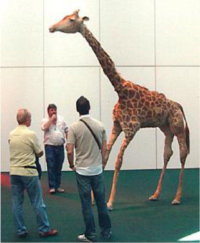 """Die ausgestopfte Giraffe """"Brownie"""" von Peter Friedl starb im Jahr 2002 bei israelischen Angriffen im Zoo Qalqiliyah im Westjordanland. Sie ist eines der Wahrzeichen der documenta 12. Fotos: Gerda Jaeschke"""