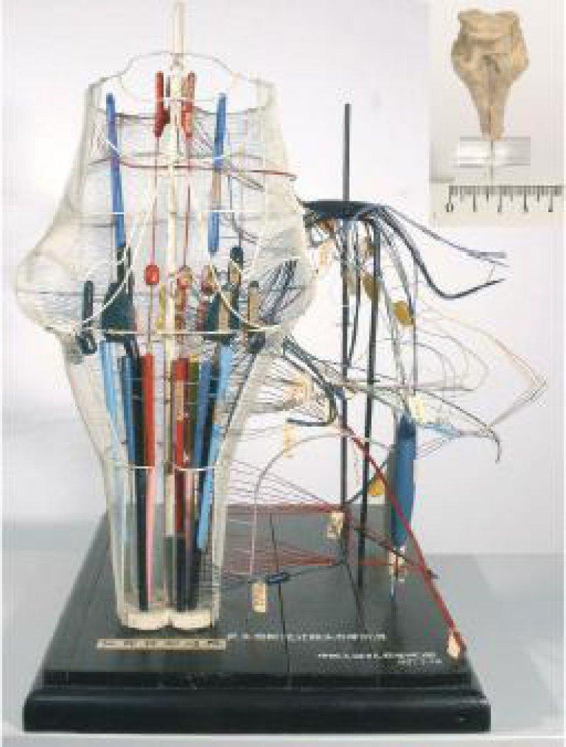 Hirnstamm- Modell, Geschenk der Universität Peking 1957, rechts oben das Original Foto: Lehrsammlung für Anatomie Leipzig