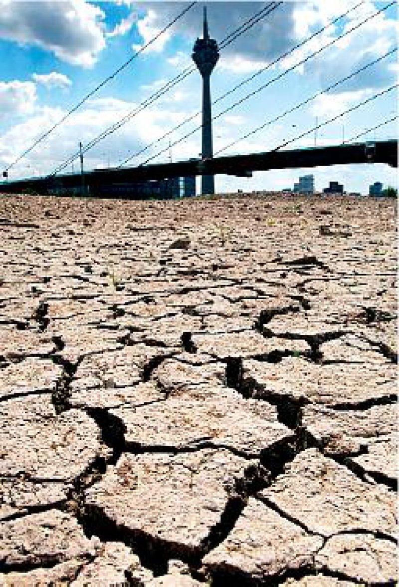 Hitzeperioden werden häufiger: Ausgetrocknetes Rheinufer in Düsseldorf im Sommer 2003. Foto: dpa