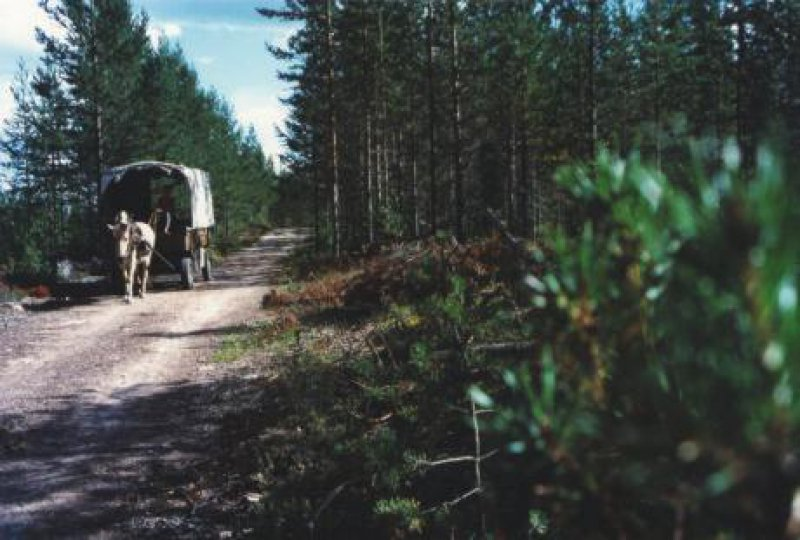 Der Weg ist das Ziel: Mit zweieinhalb Stundenkilometern zockeln Pferd und Urlauber durch das Land der Bären, Wölfe und Elche. Fotos:Helge Sobik