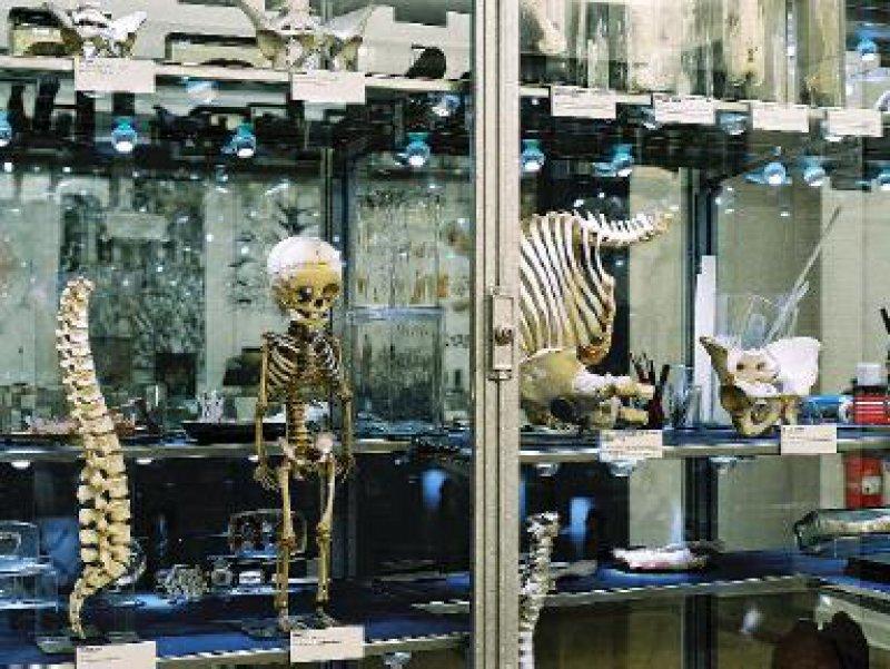Der Blick unter die Haut gibt den menschlichen Körper preis. Die Skelette halfen den Medizinern, Krankheiten zu verstehen. Foto: Thomas Bruns