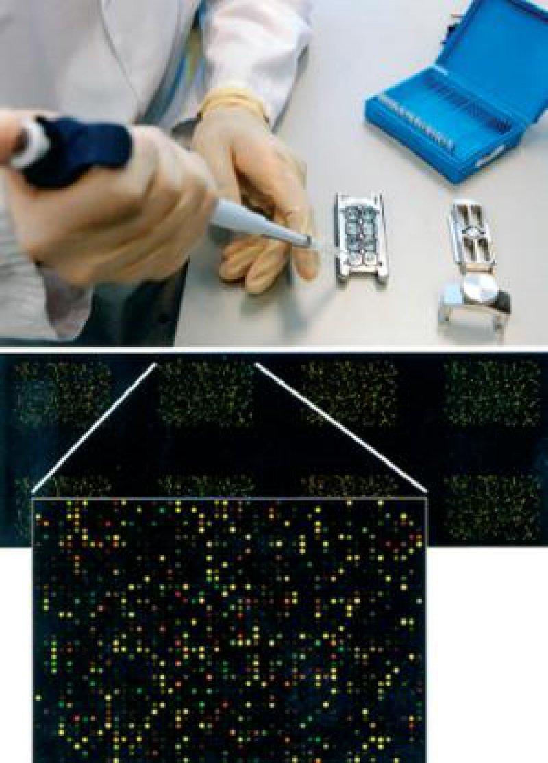 Der Mammaprint-8-Pack-Array enthält auf einem Objektträger acht Einzelarrays. Der vergrößerte Ausschnitt weist auf einen Fall mit niedrigem Rezidivrisiko hin. Foto: Agendia BV