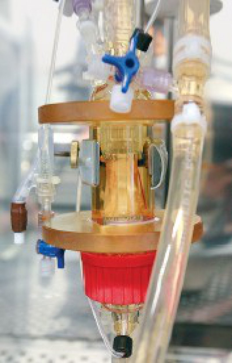 Vor der Implantation: Besiedlung eines Herzklappengerüsts mit Endothelzellen Foto: MHH