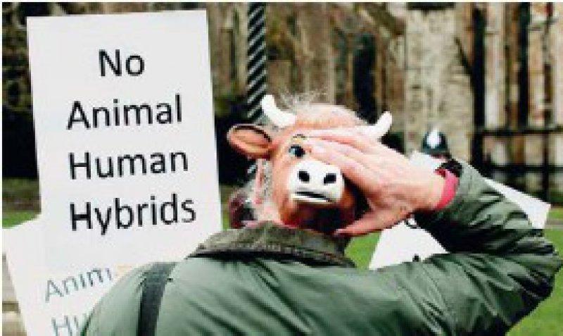 Nur wenige Demonstranten: Die Gegner von Kuh- Mensch-Embryonen sind in Großbritannien in der Minderheit. Foto: dpa