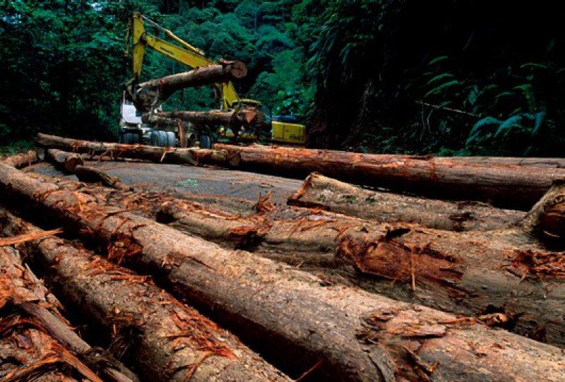 Die Risiken nicht unterschätzen: Anleger müssen sich der Tatsache bewusst sein, dass Holz ein sehr volatiler Markt ist und die diversen Anlagemöglichkeiten deshalb erheblichen Schwankungen unterliegen. Fotos: mauritius images