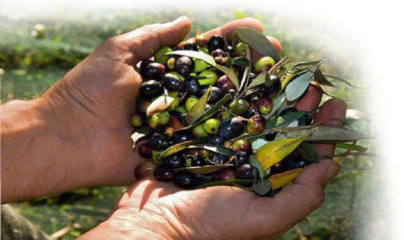 Dunkelviolett oder hellgrün: Die prallen Früchte werden relativ spät, zwischen Oktober und März, geerntet. Foto: Mauritius