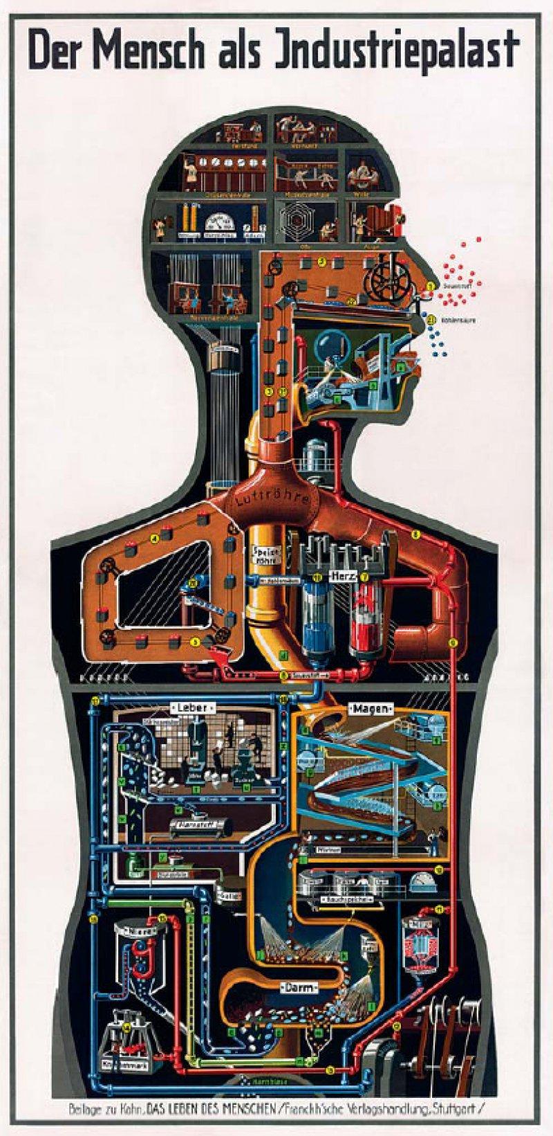 Einer technischen Zeichnung gleicht der Mensch auf Kahns wohl bekanntestem Bild, einem Poster. Der Schnitt durch den Körper gibt den Blick frei auf eine Abfolge von Produktionsvorgängen. Fotos: Debschitz, fritz-kahn.com