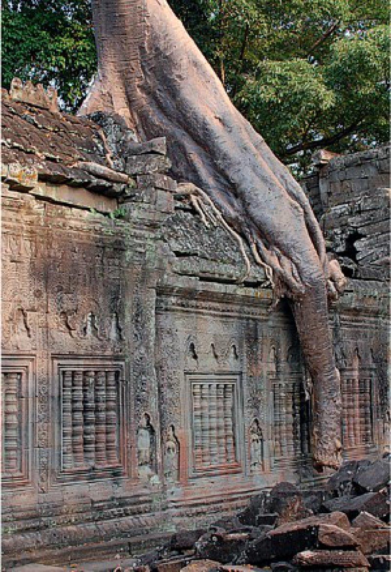 """Die wuchtigen Mauern von Angkor Thom – """"erdrosselt"""" von den gigantischen Wurzeln der Kapokbäume. Fotos: Sigrid Mölck-Del Giudice"""