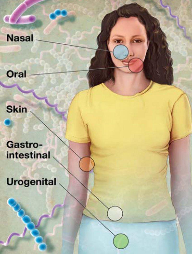 Lebensraum Mensch: Zum humanen Mikrobiom gehören in erster Linie Bakterien des Darms, aber auch von Haut, Urogenitaltrakt, Mund, Rachen und Nase. Abbildung: NIH Medical Arts and Printing