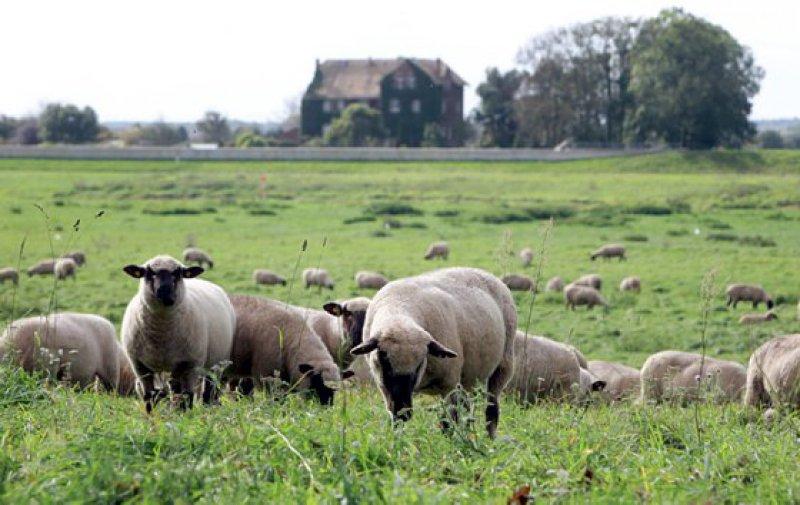 Lust auf Landleben? Der Bedarf an Hausärzten ist hier besonders groß. Foto: Anja Jungnickel