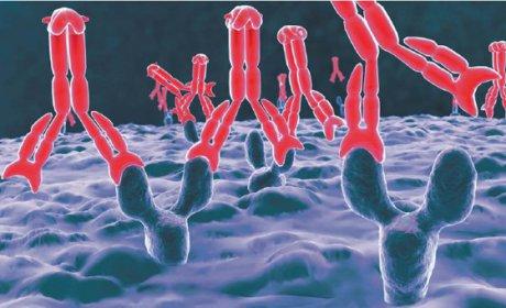 Inselautoantikörper als diagnostische Marker