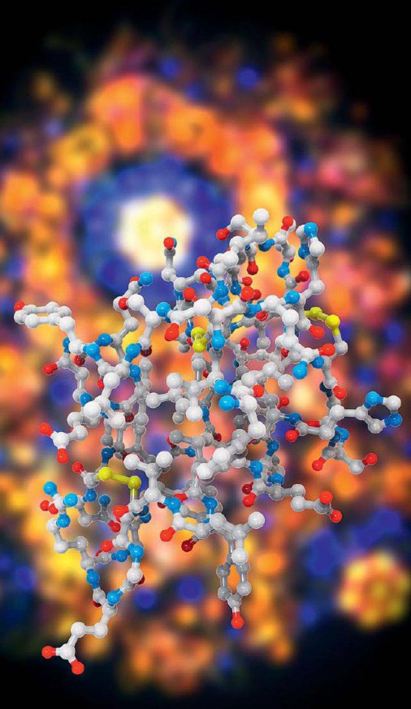 Primärstruktur des Insulinmoleküls vor der Darstellung des Moleküls in der Kristallstrukturanalyse. Foto: Science Photo Library/Agentur Focus
