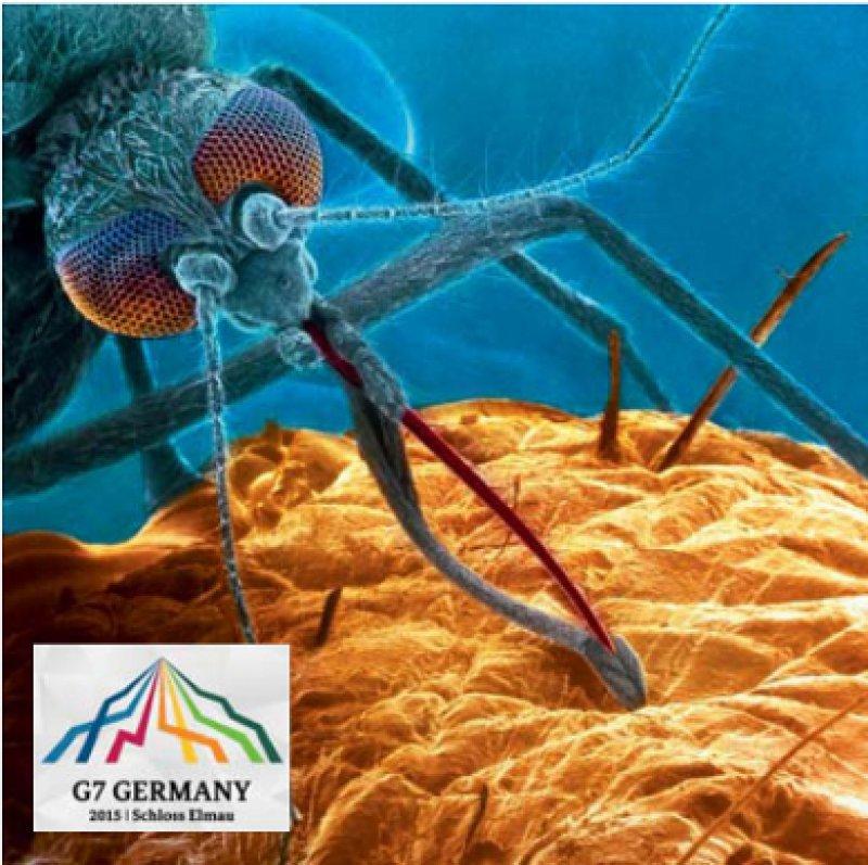 Durch Stechmücken werden jährlich mehr als 300 Millionen Menschen allein mit Malaria infiziert. Foto: dpa