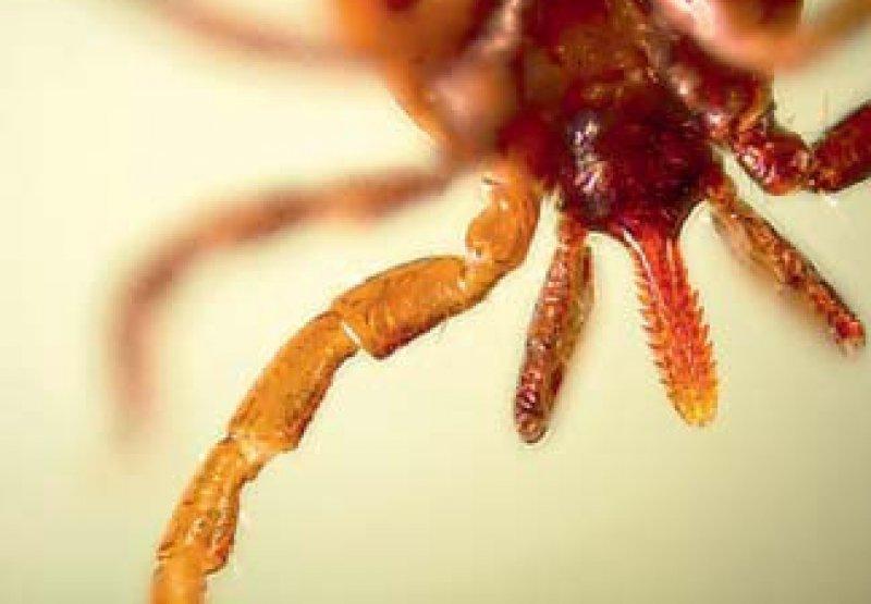 Zecken können gefährliche Krankheiten übertragen. Foto: picture alliance