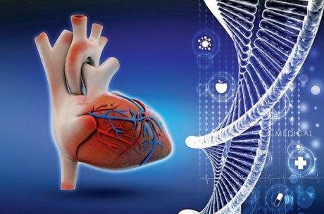 Molekulare Prinzipien in der Kardiologie