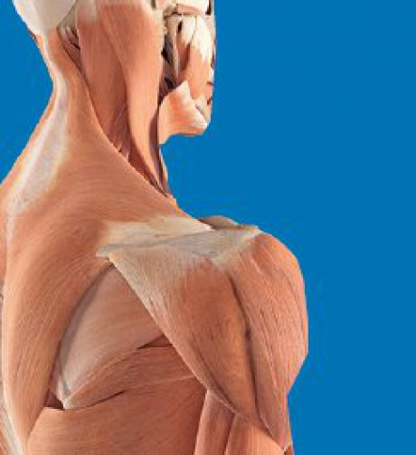 Muskelbeschwerden