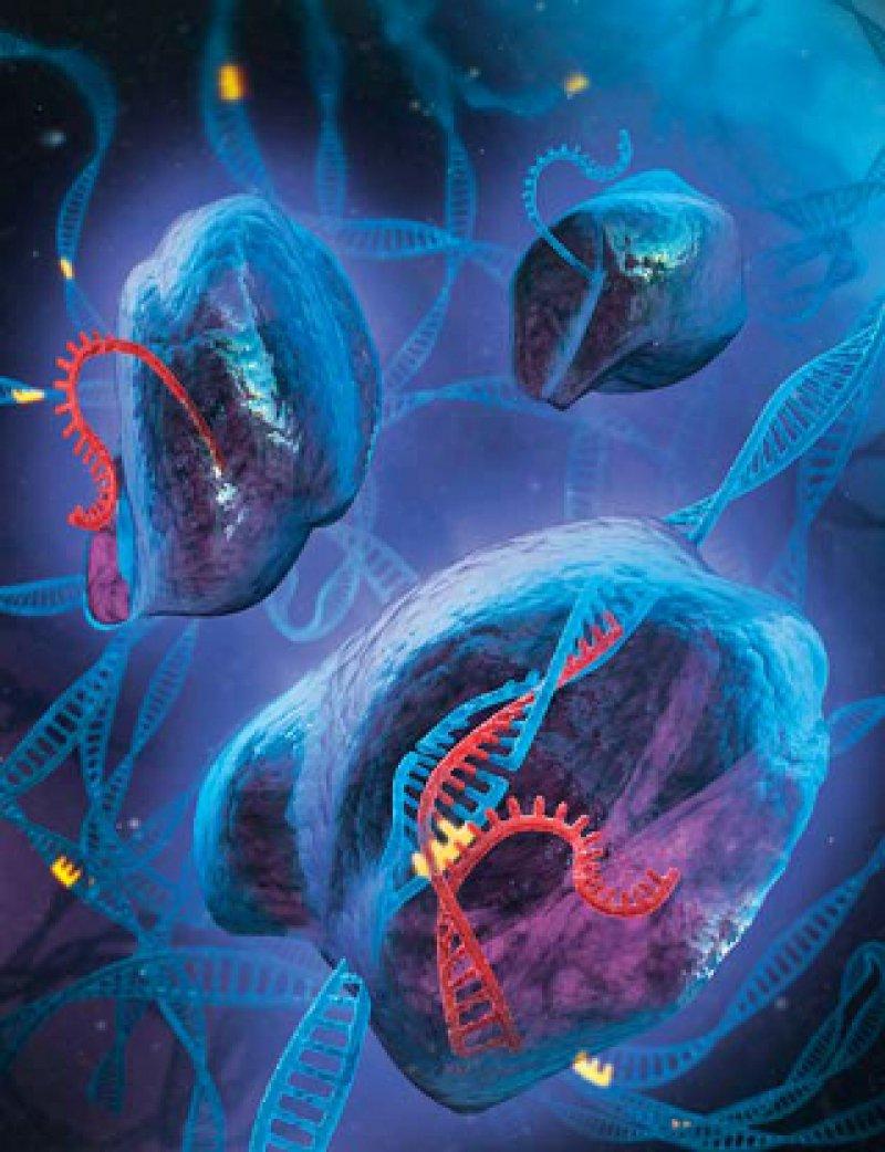 Die CRISPR-Technologie (Clustered Regularly Interspaced Short Palindromic Repeats) wird schon länger eingesetzt. Foto: Steve Dixon