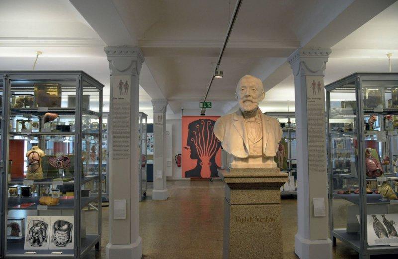 Der berühmte Präparatesaal Rudolf Virchows: Die Präparate dienten der Forschung und waren Bestandteil einer Lehrsammlung. Foto: Nina Diezemann