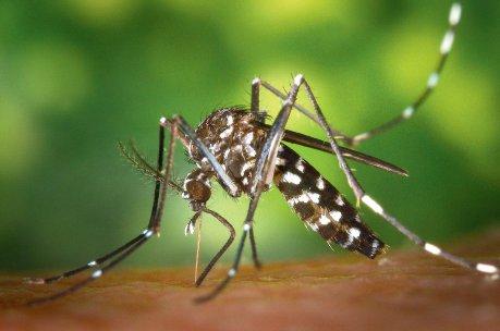 Zikavirus-Infektion