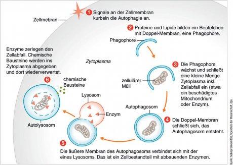 Medizinnobelpreis