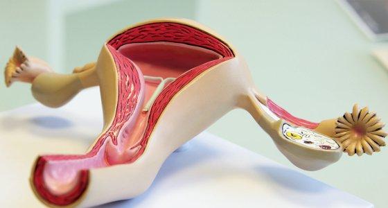 EMA prüft levonorgestrelhaltige Hormonspiralen auf ...  EMA prüft levo...