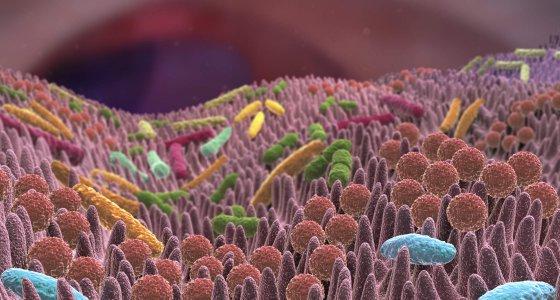 Darmzotten mit verschiedenen Mikroben. /Alex, stock.adobe.com