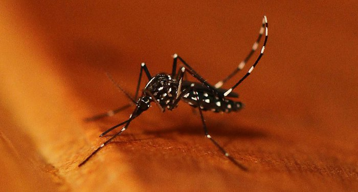 Erste autochthone Zika-Erkrankung in Europa