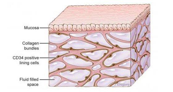 Das Interstitium ist unter der oberen Hautschicht zu sehen. Das Netzwerk, das den Organismus durchzieht, könnte an der Ausbreitung von Krebs beteiligt sein. /Mount Sinai Health System, dpa