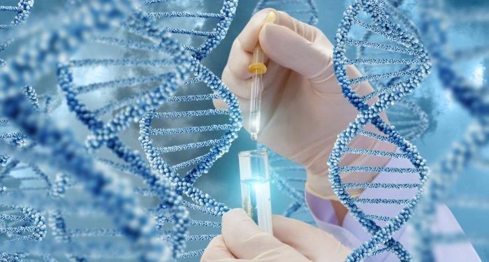 Gentherapie lindert Sichelzellanämie durch Mobilisierung von fetalem Hämoglobin