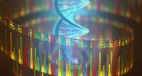 SARS-CoV-2: Auto-Antikörper und Gendefekte beeinflussen Erkrankungsrisiko