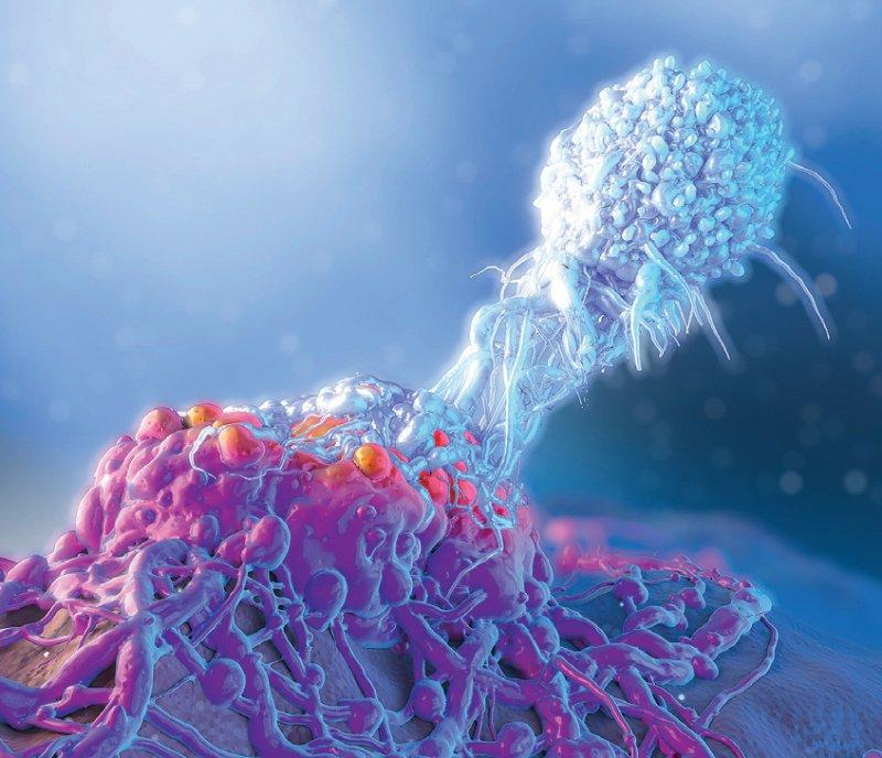 T-Lymphozyt (rechts oben) attackiert eine Krebszelle (links unten). Foto: Science Photo Library/De Angelis, Maurizio