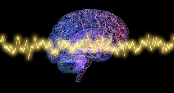 Gehirnwellen im 3D Hirnmodel  /vrx123, stock.adobe.com