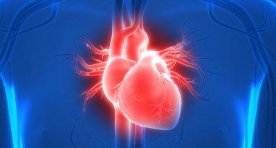 Myosin-Inhibitor verbessert Herzfunktion bei obstruktiver hypertrophischer Kardiomyopathie