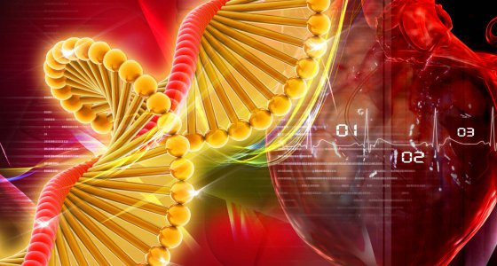 3D-Grafik zeigt ein Herz und eine DNA-Doppelhelix. /4designersart, stock.adobe.com