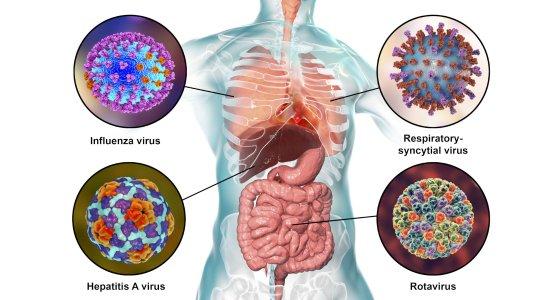 Verchiedene Viren, u.a. Influenza und RSV/ Kateryna_Kon AdobeStock_232651998