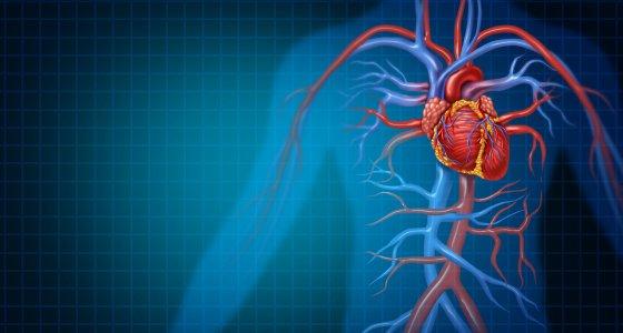 Cardiology And Cardiovascular Heart Concept /freshidea stock.adobe.com