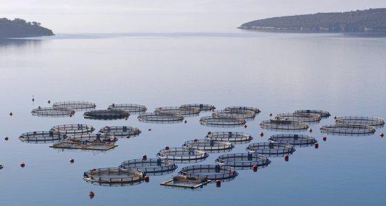 Fischaufzuchtstation im Mittelmeer nahe Galaxidi Griechenland. /dpa