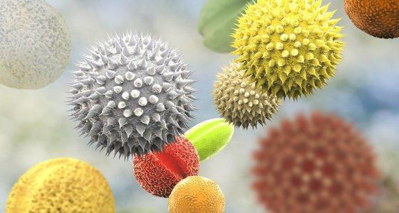 Pollen bzw Allergene von verschiedenen Pflanzen. /Kateryna_Kon, adobe.stock.com