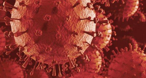 Grippe A Grippevirus H1N1 H5N1 H5N1 Partikel. Eingefärbt in roter 3D-Darstellung der Ausbreitung des Virus Schweinegrippe, Vogelgrippe, Hundegrippe, Pferdegrippe Epidemie./dpa